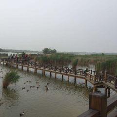Beijing Wild Duck Lake National Wetland Park User Photo