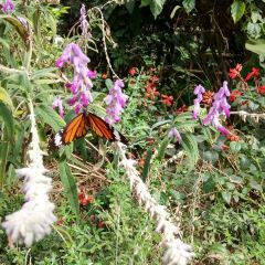 Butterfly Spring Park User Photo