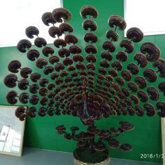 羅浮山航天育種基地用戶圖片