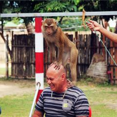 Island Safari Samui User Photo