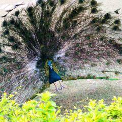 시솽반나(서쌍판납) 원시수목원 집라인 여행 사진