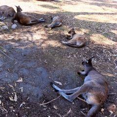 克萊蘭德野生動物園用戶圖片