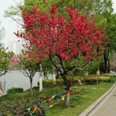 木蘭山茶園用戶圖片