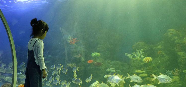岳陽海立方酷比克海洋公園