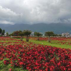 Yunhai Fangcao Flower Garden Expo Park User Photo