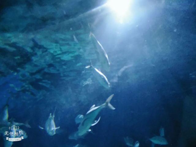 Nanchong Polar Ocean World