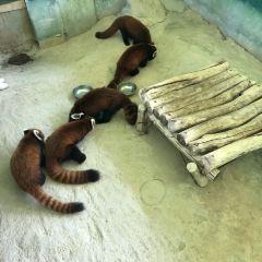 Hangzhou Safari Park User Photo