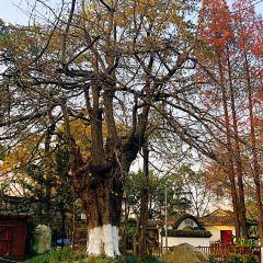 Baihuatan Park User Photo