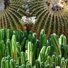 Majorelle Garden User Photo