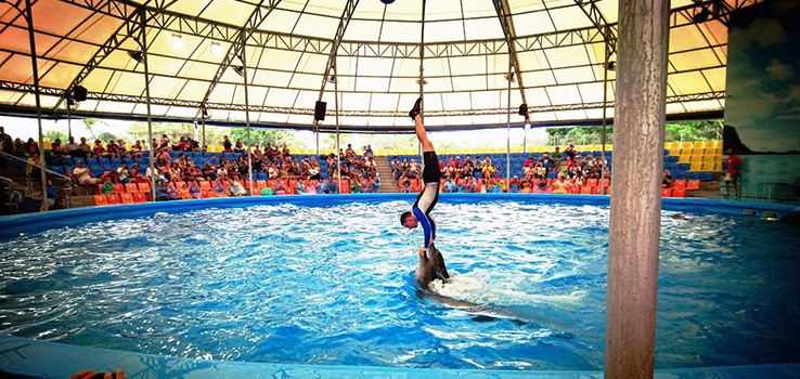 Dolphins Bay Phuket1