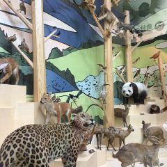 Shanghai Natural History Museum User Photo
