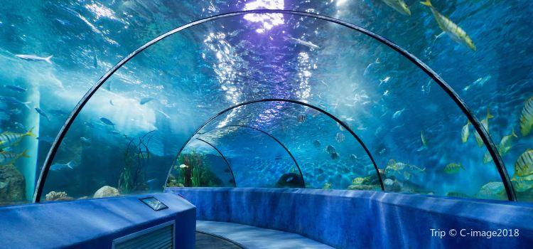 Nanjing Underwater World1