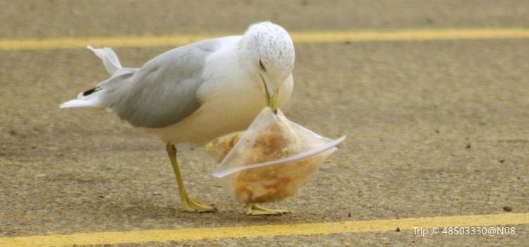 海鷗的停車場2