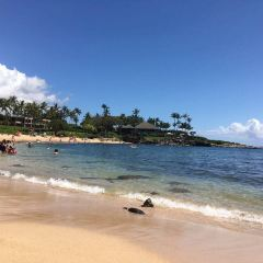 Kapalua Beach User Photo