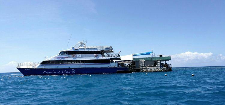 Reef Magic Cruises
