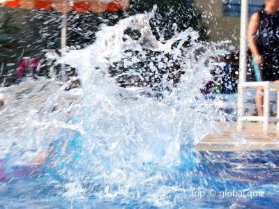 Pool (Basen)