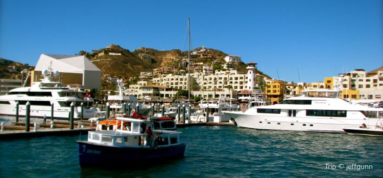 Cabo San Lucas Sportfishing Charters1