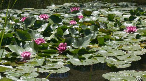 Jardin Botanico La Laguna