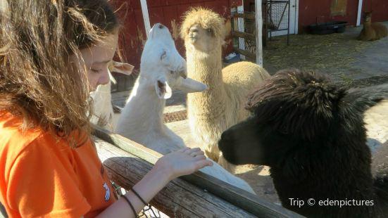 Royal Oaks Alpacas