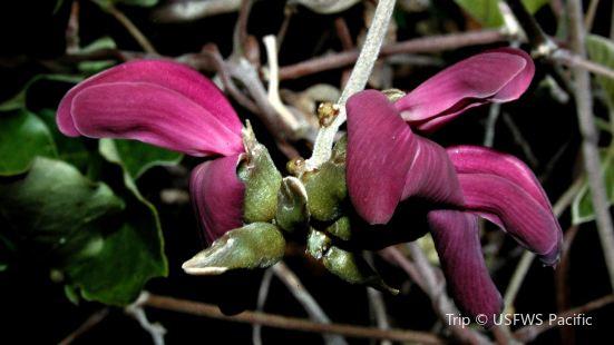 Ahihi-Kinau自然保護區