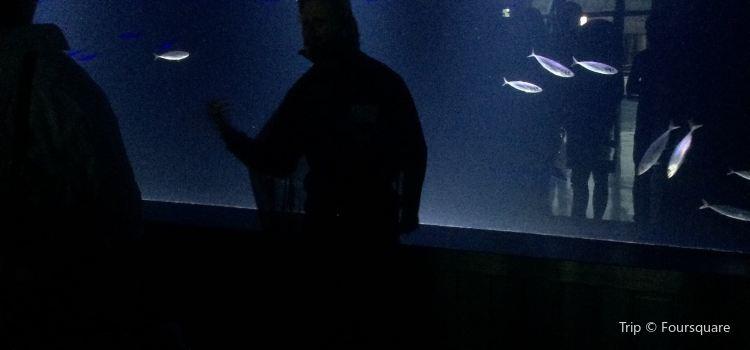 Israel Aquarium2