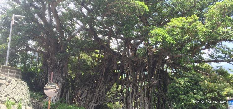 志戶子榕樹園
