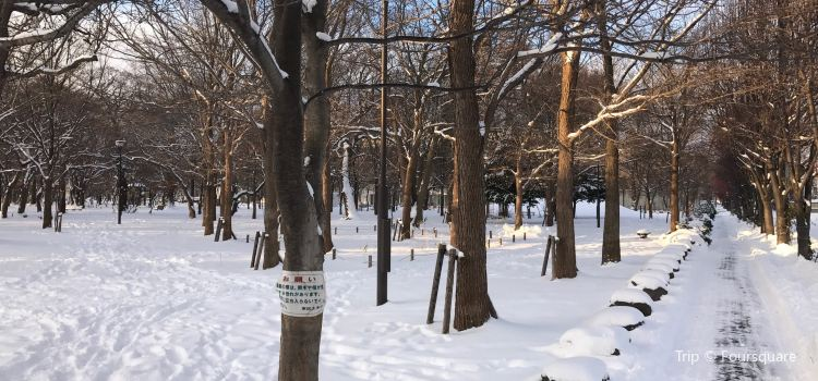 大學村の森3