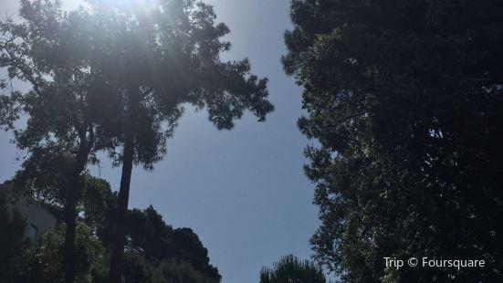 Monte Mulini
