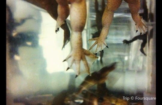 Marine Biological Laboratory2