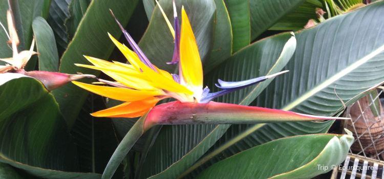 Luthy Botanical Garden2