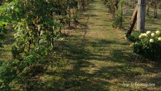 Tidal School Winery