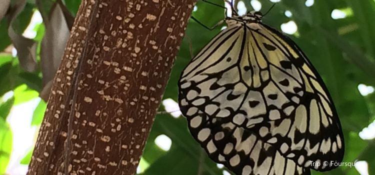 Schmetterlingspark1
