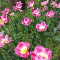 中山植物園用戶圖片