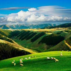 甘加草原用戶圖片