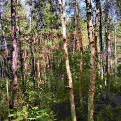 湯旺河石林風景區(湯旺河國家公園)用戶圖片