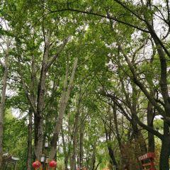 宗角祿康公園用戶圖片