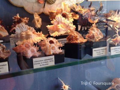 貝殼博物館