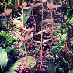 리옹 수목원 여행 사진