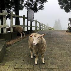 Rokkosan Farm User Photo
