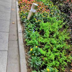 Swallow Garden  User Photo