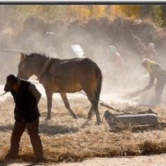 天野牧場用戶圖片