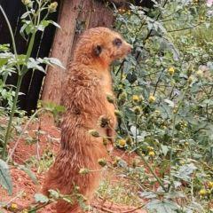 雲南野生動物園用戶圖片