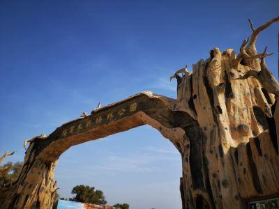 塔里木胡楊林國家森林公園