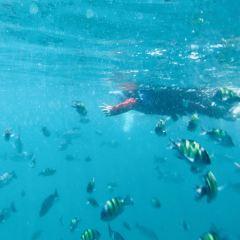 芭雅島潛水用戶圖片