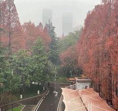 Baodao Park (East Gate) User Photo
