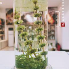 陝西醫史博物館用戶圖片