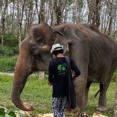 Elephant Care Park Phuket User Photo