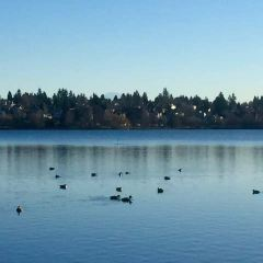Zoo Lake User Photo