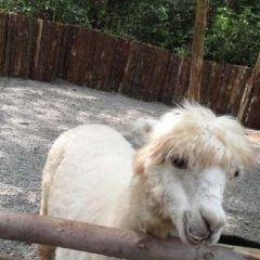 海南熱帯野生動植物園のユーザー投稿写真