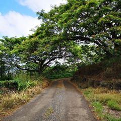 Waikiki Historic Trail User Photo